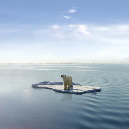 polar-bears-2_large